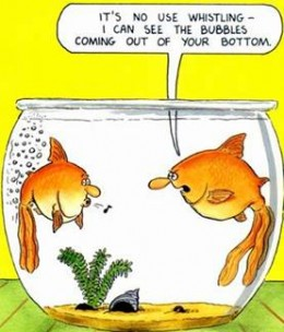 Keep a sense of humour !