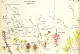 "Map of the fynbos area. By Liz McMahon. From ""A Fynbos Year"" by Liz McMahon and Michael Fraser"