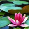 Bloomerbug profile image