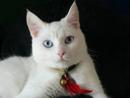 Cat sitting pet service