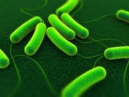 NDM-1 is found in E. coli bacteria.