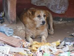 Dog Saves Dog On Highway