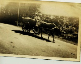 Ox Cart in Philippines during World War II