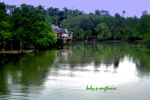 a house amidst a mangrove forest and water