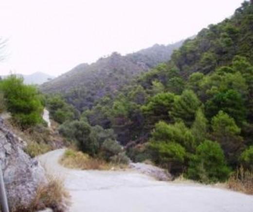 Park Natural outside El Acebuchal