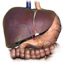 HCV Symptoms and Treatment