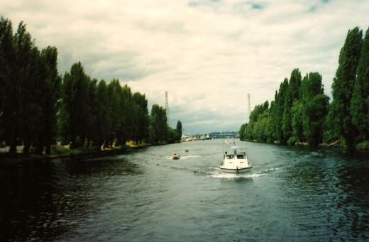 Poplars planted as living WWI memorial in Seattle on waterway.