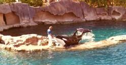 Canada - Vancouver Aquarium in Stanley Park - Magnificent Killer Whales!