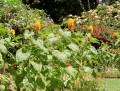 Garden Gadgets: The Best Gardening Tools For The Busy Gardener!