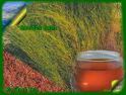 Rooibos The Miracle tea