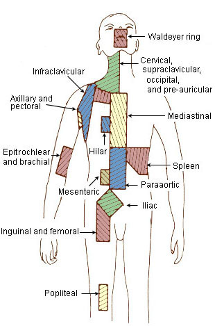 Lymph Node Regions