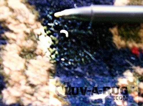 Live moth larva eating a wool rug