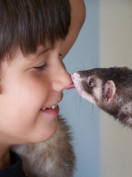 Older children and ferrets get along well!