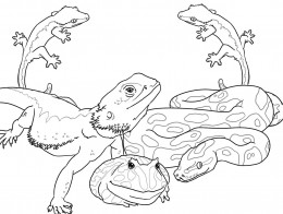 Reptiles for Kids Coloring Pages Free Colouring Pictures to Print  -  Iguana, Alligator, Geckos