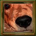 Dog Hearing and Sense of Smell