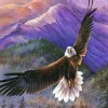 Shilo  Eagle profile image
