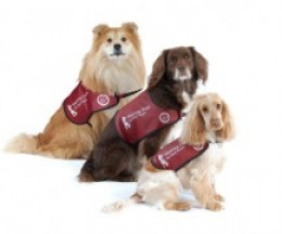 Hearing Dogs come in all shapes and sizes!