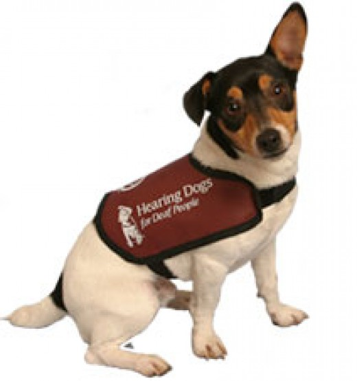 Hearing Dogs for the Deaf are well trained professionals that enhance the life of there masters by both alerting them to sounds and by providing the same love any dog does.