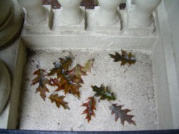 Dried oak leaves on a balcony