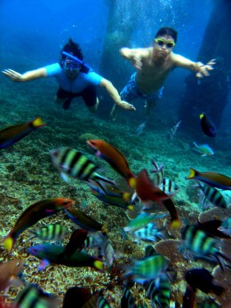 Redang Marine Park, My wife and I snorkelling among Beautiful Marine Fishes