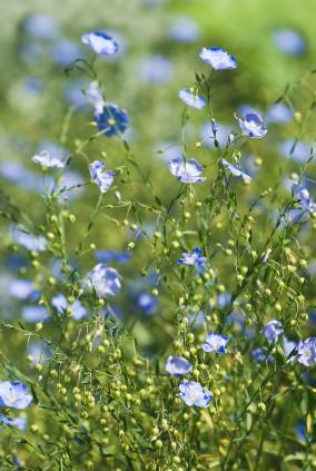 image:fiberorganics.com