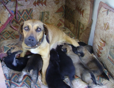 Eight Tits and Nine Puppies!