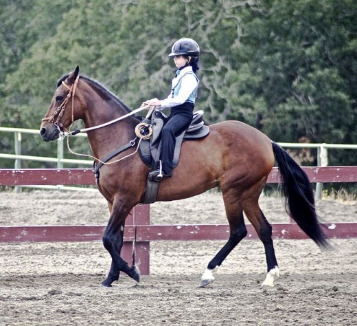 Paso Finos are smooth gaited, a trait that beginners appreciate. They also tend to be easy going.