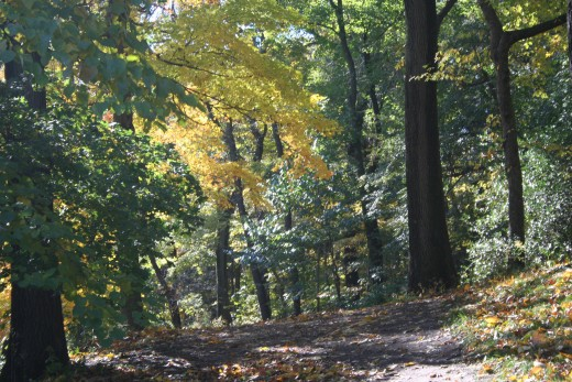 Wooded Path at the Arnold Arboretum in JP, MA.