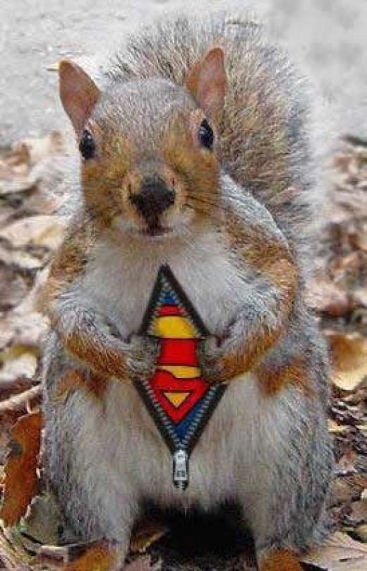 Will someone tell the squirrel the Halloween costume goes on the OUTSIDE!