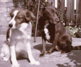 Benny on the left may look cute but it was Drupi on the right who was a sweetheart. Their doggie body language says it all