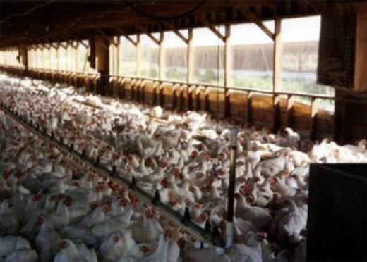 This is an actual Egg Farm