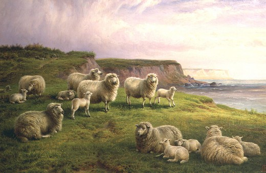 Sheep Resting on a Dorset Coast, by Charles Jones. From oceansbridge.com