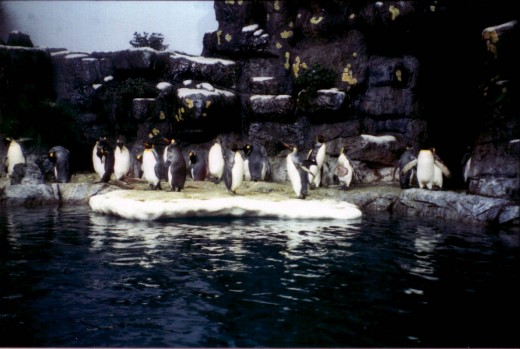 I was very surprised to see penguins in the Aquarium