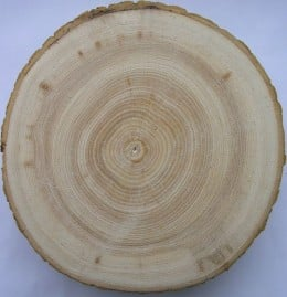 Fraxinus excelsior cross section witch includes sapwood