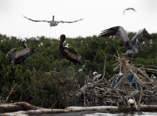 The oil spill in the Gulf is a deadly example of pollution and habitat destruction.