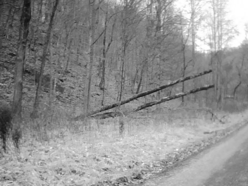 """""""Fallen Trees"""" ** Photography by me"""