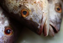 Fish are being poisoned by pollution.