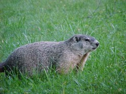 People, Groundhogs and other Varmints