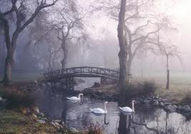 This is not Devonian Park, this is actually located between Lost Lagoon and 2nd Beach. This early morning scene in the fog shows some swans that are permanent residents.