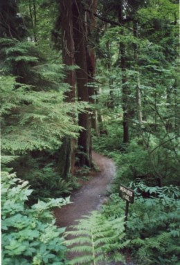 This is one of the many walkways through virgin growth arboreal growth that is the main feature of this calming place.