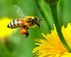 Honey allergies? Possible solution if you love honey