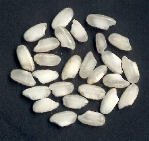 Arborio rice grains