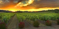 Temecula's Shakespeare in the Vines