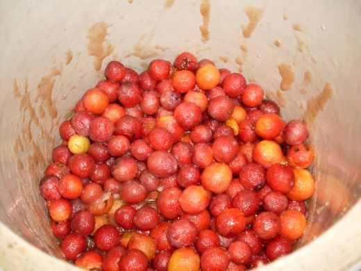 The syrup will surround, but not cover plums. You should stir them once or twice a day.