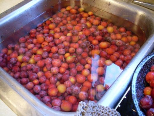 Wash plums gently in water.