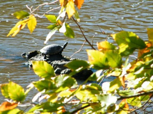 Giant turtle on a Sunny Day