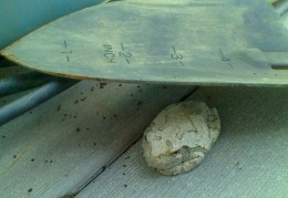 a white frog visiting with us on our back deck, hiding among the gardening tools