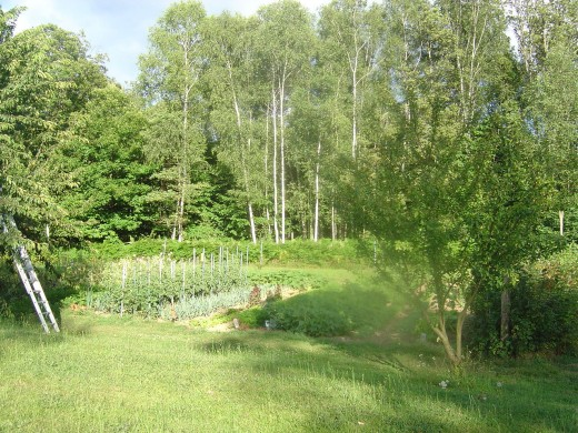 Much of the fruit and vegetables is grown in the plot next to the restaurant