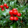 How to Use Essential Oils for Christmas