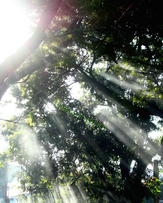 """""""Be guided by the light from above Which shines for those who love""""."""